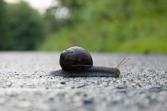 snail-3491837_640
