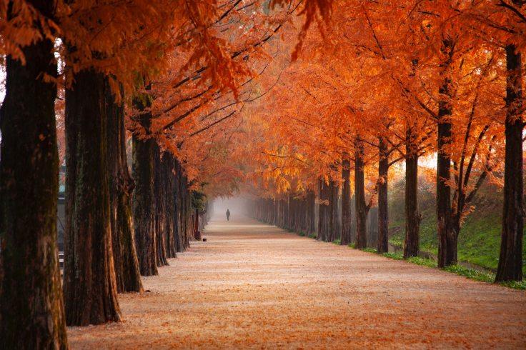 photo-of-person-walking-near-orange-leafed-trees-2734512